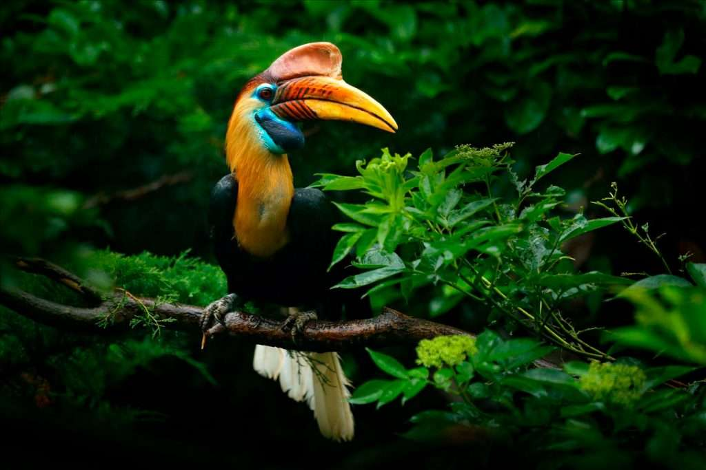 Spectacular Wildlife from Costa Rica